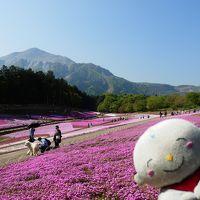 秩父巡礼2013と芝桜