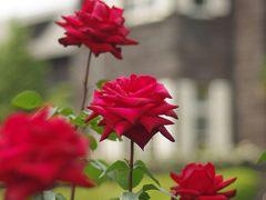 五月は薔薇の香りで優雅に♪(旧古河邸にて)