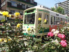 2013年05月 都電大塚駅~向原駅間の薔薇を見に行きました。