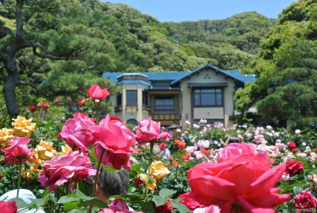 鎌倉文学館のバラを楽しんできました。<br />お天気は良かったのですが、風が強く、バラの花はは大きくスウィングしていました。<br />文学館の次は、長谷寺から成就院へ、紫陽花の下見もしてきました。<br /><br />鎌倉文学館のバラまつりは、5月15日〜6月9日です。<br />191種類230株のバラが植栽されているそうですが、少し傷んでしまった花も目立ちました。