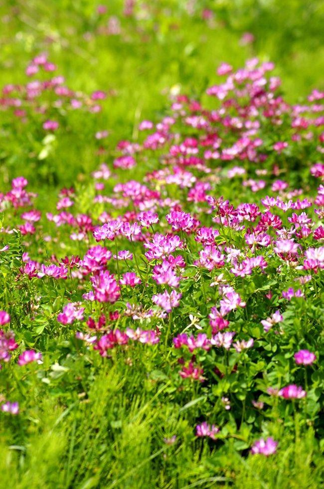 ☆福島県の季節の移り変わりを山野草や風景を中心に紹介しているブログ「福島・四季・彩々」、このシリーズも回を重ねもうPart,26です。良かったらのぞいてみて下さいね(^^♪。 <br /><br />※日々連載中です。 <br /><br />