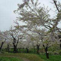 大沼・函館ミシェランの旅