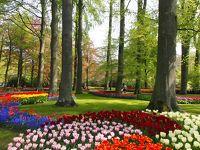 2013 満開のチューリップが見たいの!GWはオランダ・ベルギーへ(オランダ編)