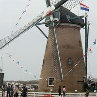 2013佐倉チューリップフェスタ オランダ風車とチューリップの公園