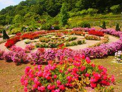 2013.6月★日本一のバラ園★花フェスタ記念公園