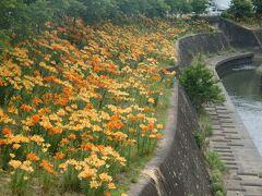 散策にぴったり掛川城大手門のゆり