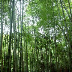 京都一周トレイル 西山コース(清滝~苔寺谷)