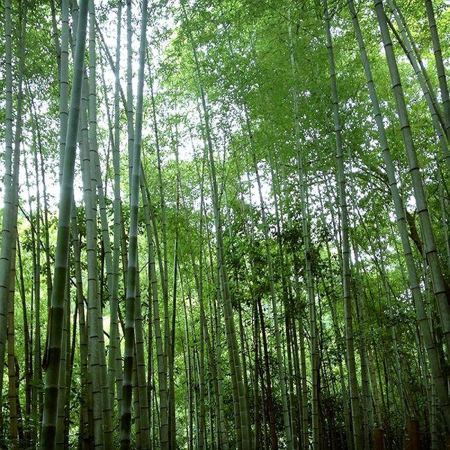 京都一周トレイルは、京都市を囲む山を手軽に楽しめるように整備されたウォーキングコースです。<br />京都の東南、伏見稲荷から比叡山、大原、鞍馬を経て高雄、嵐山、苔寺に至る全長約70キロのコースと、豊かな森林や清流、田園風景に恵まれた京北地域をめぐる全長約40キロのコースからなります。<br /><br />昨年11月に北山西部コースを歩いたので、今回はその続き、清滝から苔寺までの西山コース(10.7km)を歩きました。<br /><br />このコースは地元エリアかつ、嵯峨野の観光エリアとかぶっているので、山歩きというよりは近所をうろうろしている気分でした。