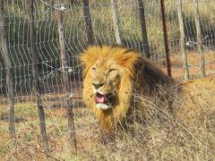 アフリカ南部周遊(16)【マプトからスワジランド・フラネ国立公園サファリへ】