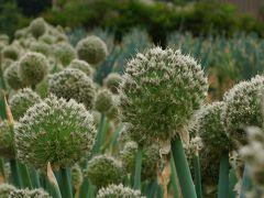 朝の散歩道 飛騨の野に咲く山野草