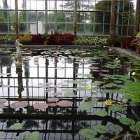 庭園紀行(110)・・・広島市植物公園(3) 睡蓮の池