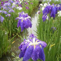 小さな旅 北山公園の菖蒲苑 Iris Garden in Kitayama Park