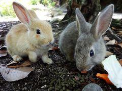 友達たずねて尾道へ&大久野島でウサギと戯れる