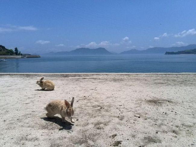 瀬戸内海に浮かぶ大久野島(通称ウサギ島)へ行ってきましま。<br />第二次世界大戦後に小学校で飼われていた数羽のウサギをはなし、天敵がいないことから島中に繁殖したとか。<br />うさぎの愛くるしさがたまりません。<br /><br />ちなみにスマホ投稿機能からです。