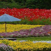 庭園紀行(147)・・・国営備北丘陵公園 花の広場から退園まで