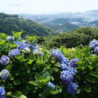 近くに行きたい♪ 「愛知の紫陽花の名所 三ヶ根山スカイラインと本光寺(*^。^*)」