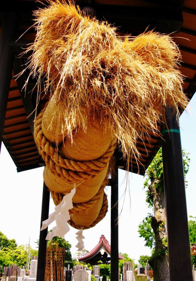 赤城神社(あかぎじんじゃ)は、千葉県流山市流山にある神社。旧社格は郷社。<br />市内を流れる江戸川の左岸(東岸)、平坦な土地に盛り上がった海抜約15m、周囲350m余りの小山の上に鎮座する。この小山はかつての洪水の際、群馬県の赤城山の山体の一部が流れてきてここに流れ着いたものという伝承がある。一説に赤城神社のお札が流れつき里人たちが祀ったのが当社の始まりともされる。<br />これに基づき当社は群馬県の赤城山にある赤城神社の末社である。また、流山という地名もこれに由来すると言われ、鎌倉時代の創建ともされている。<br />(フリー百科事典『ウィキペディア(Wikipedia)』より引用)<br /><br />赤城神社 大しめ縄行事<br /> この神社の秋の祭礼に先立ち準備をする日を「宮薙(みやなぎ)」といい、この日大しめ縄づくりがおこなわれます。宮なぎは現在10月上旬の日曜日です。<br /><br />  流山5丁目から8丁目地区の人が丁目ごとに4班に分かれ、3つの班が青竹を芯に藁と縄を巻きつけて1本ずつのしめ縄を、残りの1班が飾り縄などをつくります。出来上がった3本のしめ縄をよりあわせ、専用の鉄柱に掲げるのは、皆が息を合わせての大変な作業です。出来上がったしめ縄は長さ約10メートル、重さは約500キログラムもあるといわれ、次の年まで掲げられています。  流山市指定無形民俗文化財<br />( http://www.city.nagareyama.chiba.jp/tourism/7748/7754/007794.html より引用)<br /><br />新京成・東武・京成・北総 鉄道4社合同ウォーキングイベント <br /> 「江戸川沿いの新緑と幕末の歴史を感じるウォーク」を開催します. <br /> 新京成電鉄・東武鉄道・京成電鉄・北総鉄道では、平成25年5月18日(土)に4社合同のウォークイベント、歴史の面影と水辺の自然を訪ねる「江戸川沿いの新緑と幕末の歴史を感じるウォーク」を開催します。 <br /> 本イベントは、千葉県東葛地域を走る鉄道会社各社の沿線の魅力を紹介することを目的に実施するもので、今回で通算8度目の開催となります。 <br /> 今回は、東武野田線「流山おおたかの森駅」をスタートして新京成線「上本郷駅」をゴールとする、全長約14キロのコースです。 <br /> コース途中には、流山という地名の由来となった山がある「赤城神社」、新撰組が江戸から渡ってきた際に使用したと言われている「丹後の渡し跡」、筑波山とスカイツリーを一望することができる「江戸川土手」、吉田松陰にゆかりがあるとして知られる「本福寺」など、歴史や風景を楽しめる見どころが多数あります。 <br /> (http://www.shinkeisei.co.jp/topics/detail.html?news_id=481 より引用)<br /><br />流山市については・・<br />http://www.city.nagareyama.chiba.jp/<br />http://www2.tbb.t-com.ne.jp/nagareyama-s.a./<br />(http://www.jalan.net/kankou/120000/121100/spt_12220af2170020139/より引用)<br /><br />