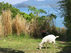 塩飽諸島 志々島で子ヤギに癒される の巻