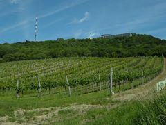 ウイーン、ブダペスト初夏の一人旅(2)~全くその気もないのにウイーンの丘へハイキング~