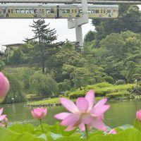 千葉公園の大賀ハスを見に訪れてみた