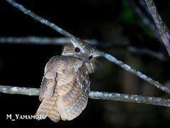 Way Kambas 国立公園で探鳥2