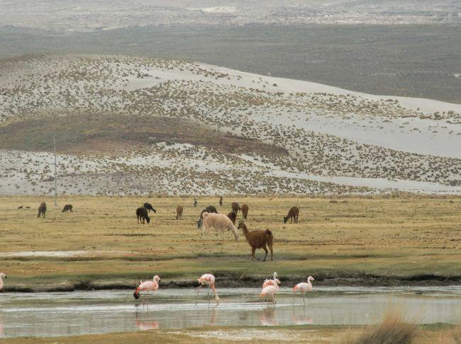 ポトシの観光名所<br />-ポトシ市自体がユネスコの世界文化遺産として登録されているので、街の中をぶらり旅するのも面白い<br />-ポトシは、スペインの植民地時代から鉱山の町として有名。最近はウユニ塩湖でも知られるようになっている<br />-鉱山ツアーも出来る、2009年01月にセーロリコ(富の山)の中に世界一高い博物館がオープンする(標高4000m)<br />-旧国立紙幣局、現在は、博物館になっている<br />-ポトシの目玉は、ウユニ塩湖である:塩のホテル、湖、奇の岩、フラミンゴ、先祖の墓、列車の墓場、温泉等<br />-湖巡り:色取り取りの湖:赤、白、緑、黄、水色、その他7湖(6泊7日必用)<br />-チリ国のサンペドロ デ アタカマ迄2泊3日で行ける、その際:赤い湖、白い湖と緑湖、温泉/入浴可、奇の岩、<br />石の木、フラミンゴ等が見れる<br />-ホテルは、四星以上をお勧め(理由:標高が高いので鉱山病になった場合、四星以上は酸素ボンベー置いてある)<br />-レストランは、中央広場周辺のレストランをお勧め<br />