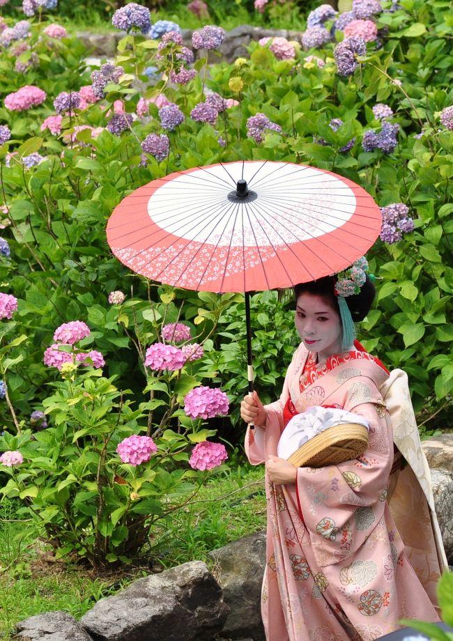 すみません、去年の旅行記です。あと4,5記ほど過去の旅行記が続く予定ですが…<br /><br />紫陽花の咲く善峯寺に原チャリで行ってまいりました