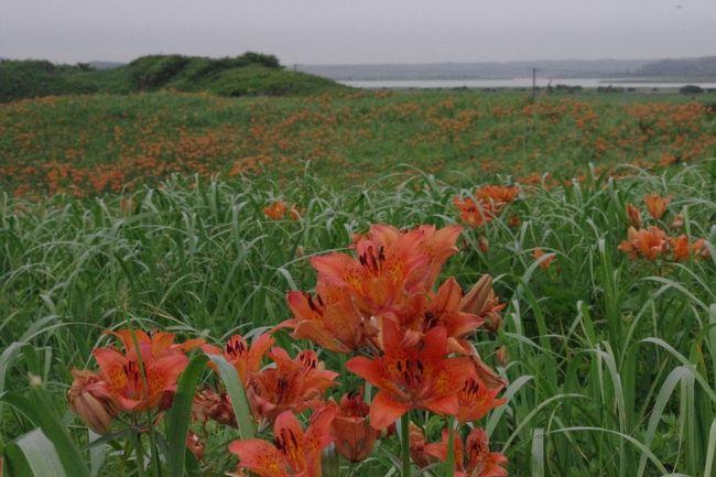 網走を後に世界自然遺産の知床へ向かいます。<br />途中、オホーツク海と濤沸湖に挟まれた砂丘にある<br />野生の花が咲く小清水原生花園に寄り<br />その後<br />オホーツク海の波と流氷によって浸食された<br />知床の自然を観光船で廻ります。<br /><br />旅程<br />☆7/3 新日本海フェリー舞鶴→小樽 はまなす乗船00:30 小樽着20:45<br />   宿泊 小樽朝里クラッセホテル<br />☆7/4 大雪山旭岳 <br />   宿泊 層雲閣グランドホテル  <br />☆7/5 大雪山黒岳 ワッカ原生花園 <br />   宿泊 あばしり湖鶴雅リゾート<br />★7/6 小清水原生花園 知床観光船(ウトロ〜硫黄山) <br />   宿泊 知床PH風なみ季<br />☆7/7 知床五湖 野付半島 摩周湖 <br />   宿泊 ラピスタ釧路川<br />☆7/8 釧路湿原 <br />   宿泊 十勝川温泉第一ホテル豆陽亭<br />☆7/9 富良野・美瑛  <br />   新日本海フェリーあかしあ乗船23:30 小樽→舞鶴<br />☆7/10 舞鶴着21:00