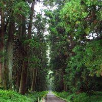 <五街道ウォーク・日光街道編.12>歴史を辿り「日光杉並木」を歩く 「徳次郎宿」~「今市」