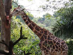 シンガポール 久々にちょっと長めに滞在 2013/7(3)動物園