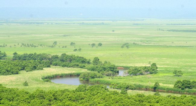 1980年 ラムサール条約登録地<br />1987年 国立公園指定(日本国内第一号の登録)<br />の<br />貴重な野生動植物の宝庫<br />釧路湿原へ<br /><br />※ラムサール条約<br /> 特に水鳥生息地として国際的に重要な湿地<br /> 国際協力を通じて保全する目的の条約<br /><br />旅程<br />☆7/3 新日本海フェリー舞鶴→小樽 はまなす乗船00:30 小樽着20:45<br />   宿泊 小樽朝里クラッセホテル<br />☆7/4 大雪山旭岳 <br />   宿泊 層雲閣グランドホテル  <br />☆7/5 大雪山黒岳 ワッカ原生花園 <br />   宿泊 あばしり湖鶴雅リゾート<br />☆7/6 小清水原生花園 知床観光船(ウトロ〜硫黄山) <br />   宿泊 知床PH風なみ季<br />☆7/7 知床五湖 野付半島 摩周湖 <br />   宿泊 ラピスタ釧路川<br />★7/8 釧路湿原 <br />   宿泊 十勝川温泉第一ホテル豆陽亭<br />☆7/9 富良野・美瑛  <br />   新日本海フェリーあかしあ乗船23:30 小樽→舞鶴<br />☆7/10 舞鶴着21:00  <br /><br />
