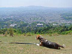 愛犬と奈良 若草山へ