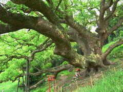 塩飽諸島 志々島で大楠のパワーに包まれる の巻