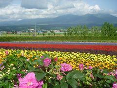 初夏の北海道 スペシャル旅 7日~8日目(1600kmドライブ最終日) 花の競演 富良野・美瑛