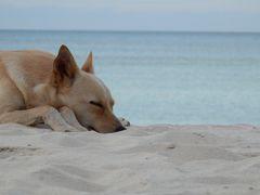 青い海と野良犬-ウヴェア島-