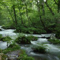 ☆ 緑の香り・・・土と水の匂い・・・せせらぎの音・・・ ☆ 夏の奥入瀬渓流 ☆