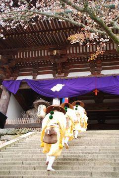 奈良で 2013年度七回めのお花見 吉野の千本桜~花供懺法会~京都に戻って二条城ライトアップ篇