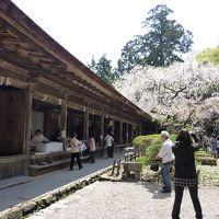 桜咲く「吉野」へ・・・。流石の素晴らしい桜の風景でした。そして、旅の後半は古都「飛鳥」へも!