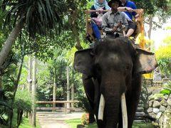 バリ島で癒される5日間【2】 一日観光編 ~ウブドで象に乗りたい~