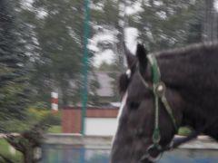 ばんえい競馬を見て、苫小牧から敦賀へフェリー