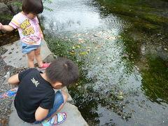 ちょっと醒ヶ井へ梅花藻を見に行ってきました♪