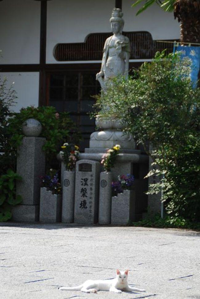 ★ちょこっと塩竈・松島① ーしおがまさま とか 猫寺 とか。★