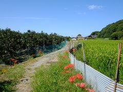 青空と彼岸花と、山の辺の道(天理~柳本)