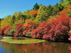 紅葉の始まり、赤く縁どられた白駒池
