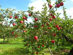 親子で伊香保温泉・水沢うどん食べくらべとリンゴ狩り 森秋旅館泊