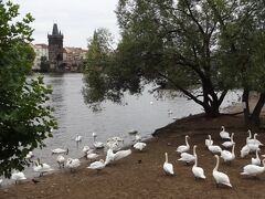 初めての欧州個人旅行~中欧4ヶ国周遊 4(プラハ)