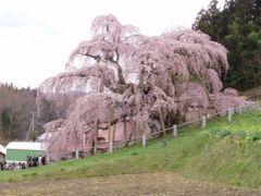日本列島塗りつぶしの旅☆福島県・・桜めぐり♪