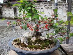 国分寺盆栽センターで盆栽を満喫