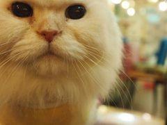 很喜歡臺灣!マンゴー食べに行って来た①' ーまずは猫カフェ「猫花園」篇