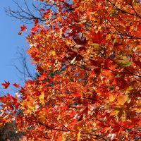 待ちに待った収穫の秋☆おいしいモノがいっぱいの道東で「天高くTOMAIKE肥ゆる秋」=3 後編